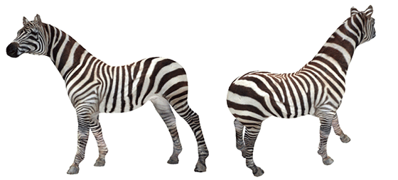 texture-montage-zebra-horse.png