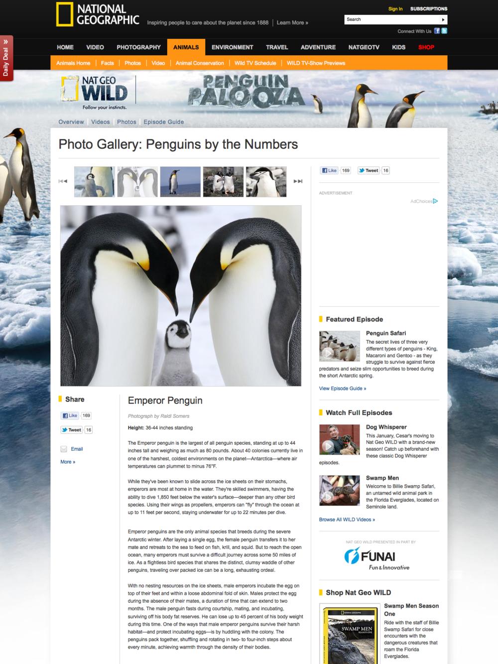 Nat Geo Wild Penguin Palooza