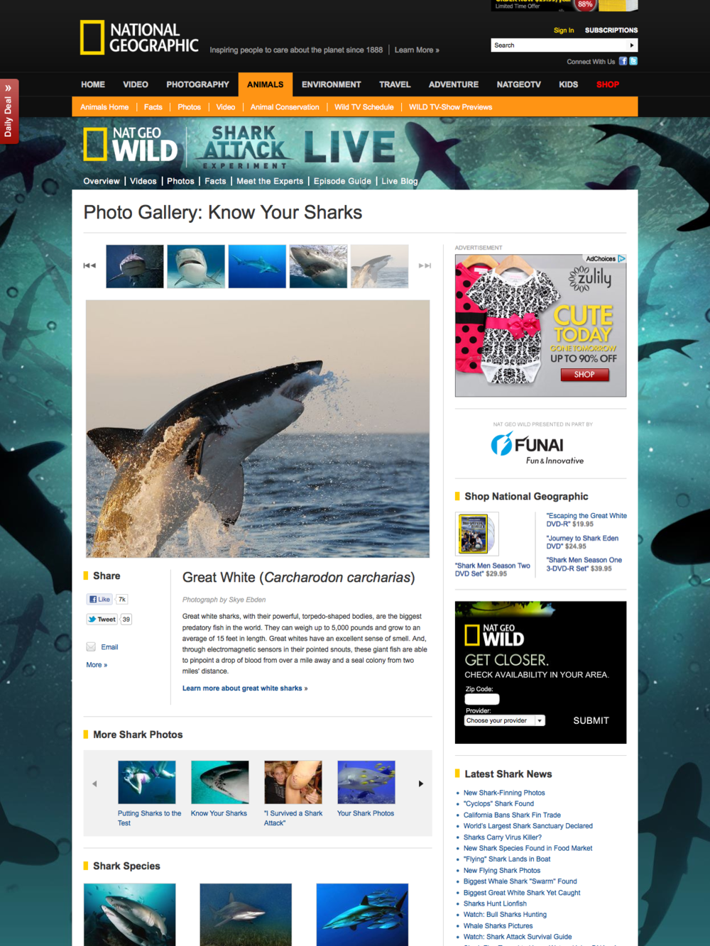 Nat Geo Wild Shark Attack LIVE