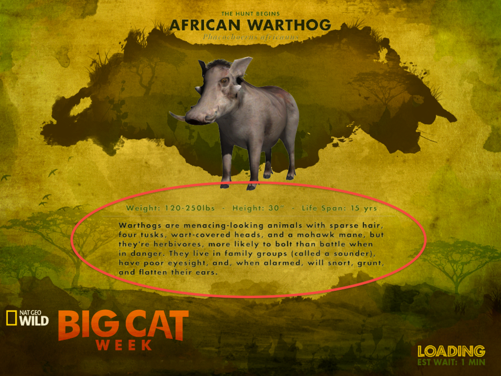 Big Cat Week App