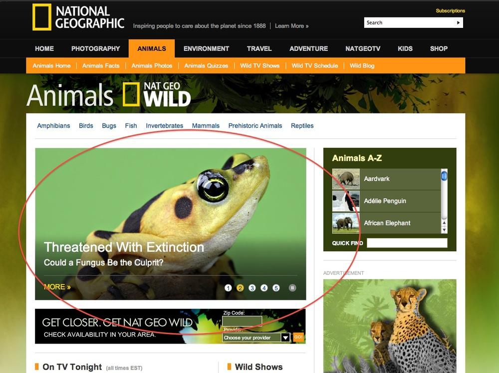 Nat Geo Wild Homepage