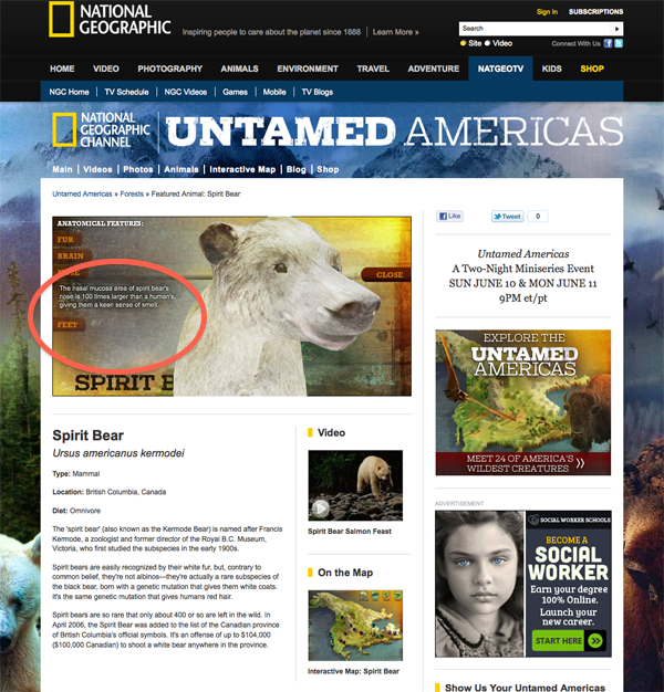 Nat Geo Channel Untamed Americas