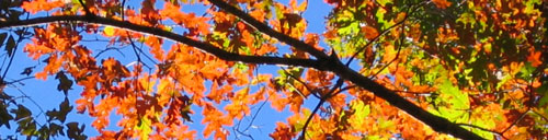 Autumn Leaves - marking the time to begin letting go, to begin turning inward