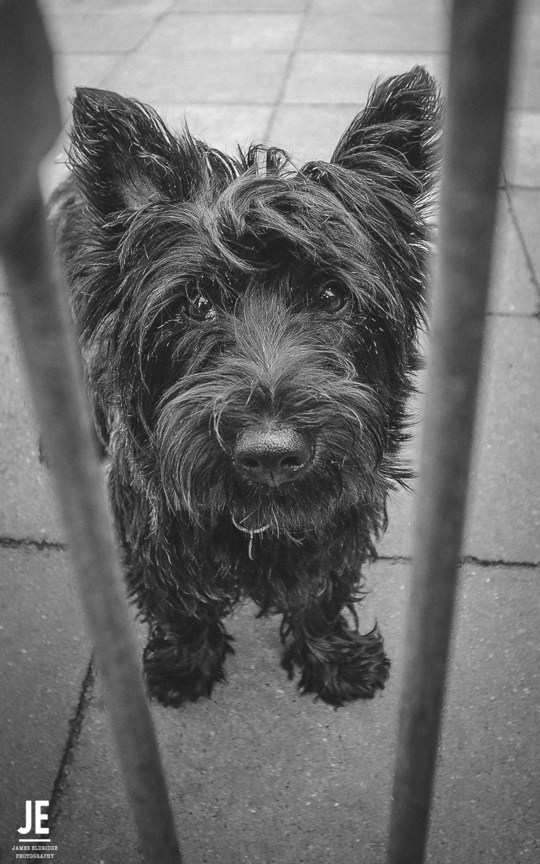Dog, eyes