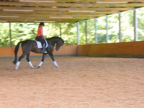 trotting horses.jpg