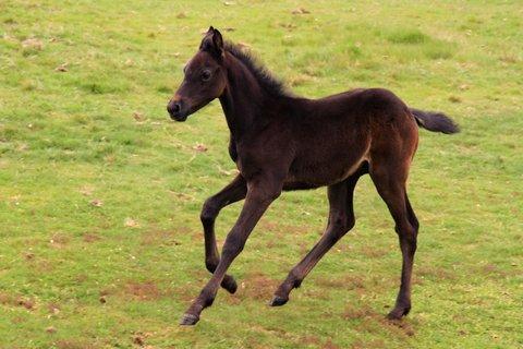 galloping horse.jpg