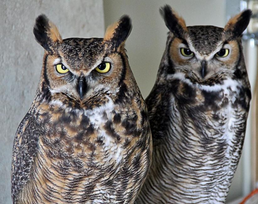 OWLS-04.jpg
