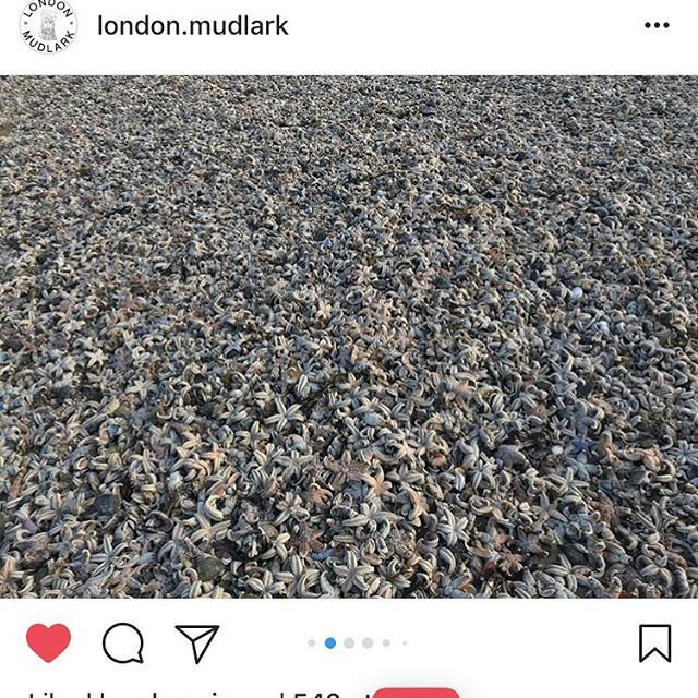 I know I'm like a broken record today but I still can't get my head around it. I think @london.mudlark has captured the sheer scale of it better than anyone. This is the last one on starfish I promise. Back to letterpress tomorrow...providing we aren't in an ark. #ramsgate #regram #starfish #sea #broadstairs #beastfromtheeast #seacreatures #nornalservicewillresumeshortly