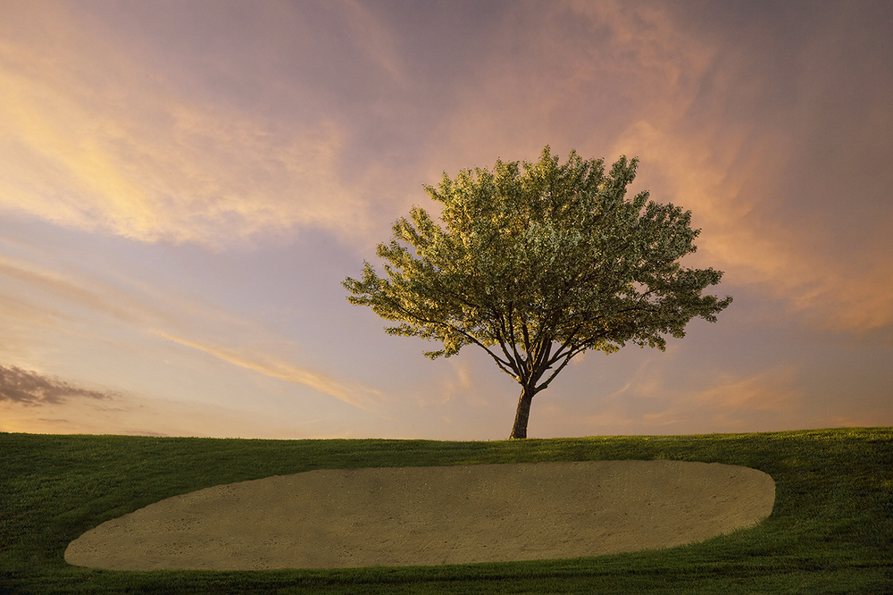 Tree on hole 3, at sunset.