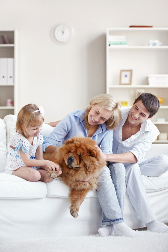 Pets and other lifestyle choices can drastically affect which set-up you decide on.