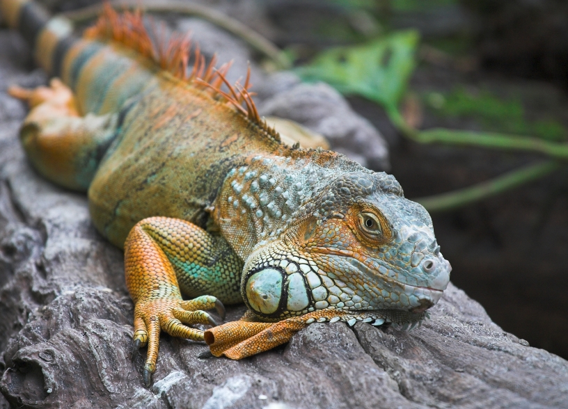 Australia is home to thousands of unique animals and reptiles, due to its diverse landscape.