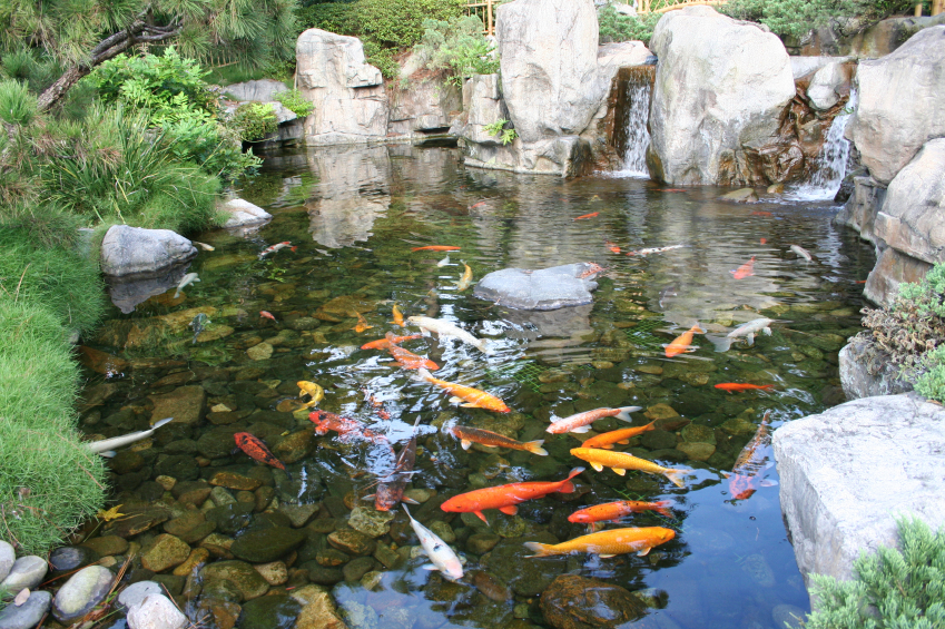Varying Koi Pond sizes can be the perfect feature for your outdoor area.