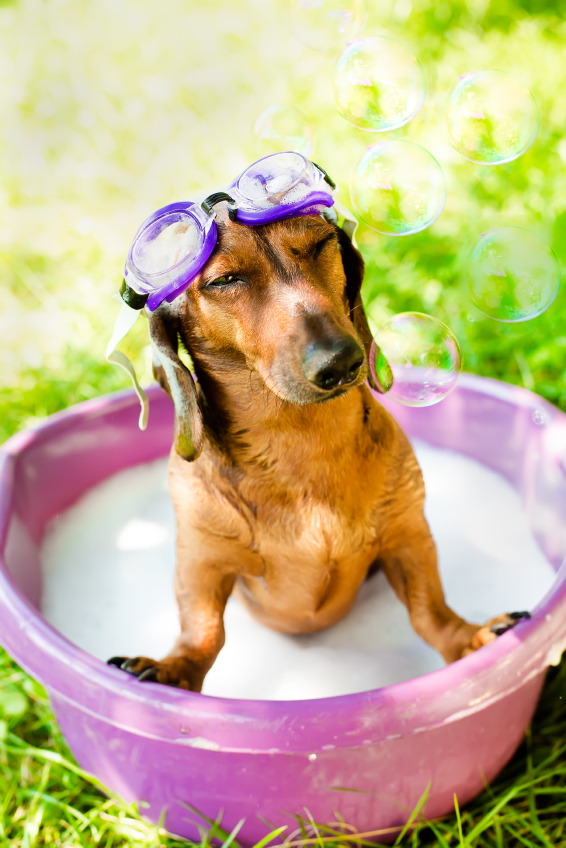 Keeping your pets clean is one of the best ways to ensure your home also stays clean!