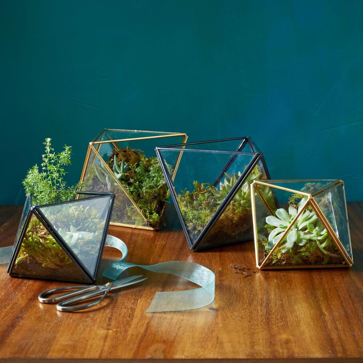 Faceted Terrarium by West Elm , $34.