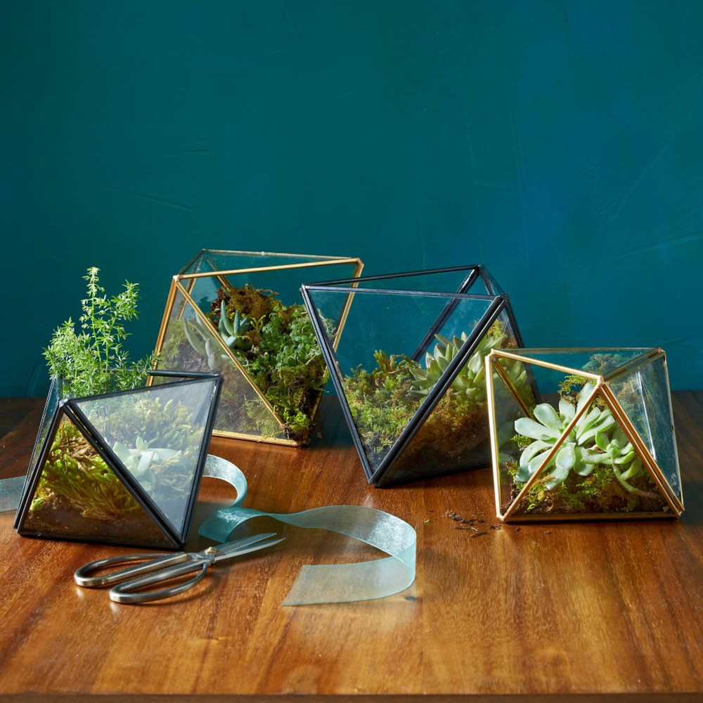 Faceted Terrarium by West Elm, $34.