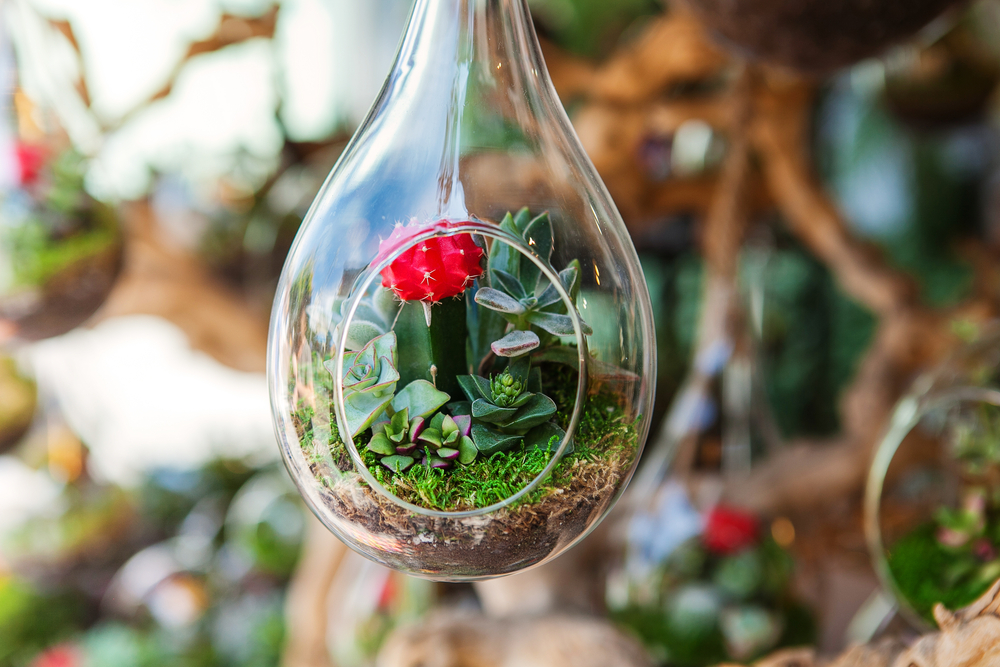 The dirt on terrariums 4 tips to make indoor plants last for Soil 7 days to die