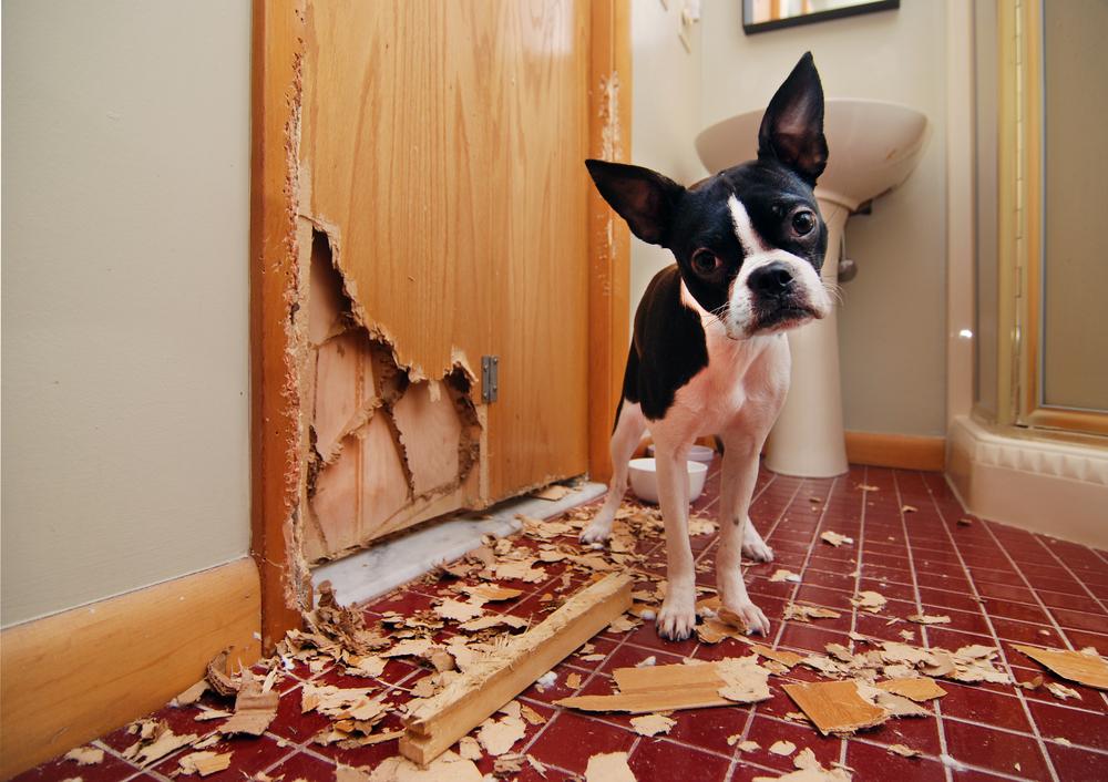 pet damages home.jpg