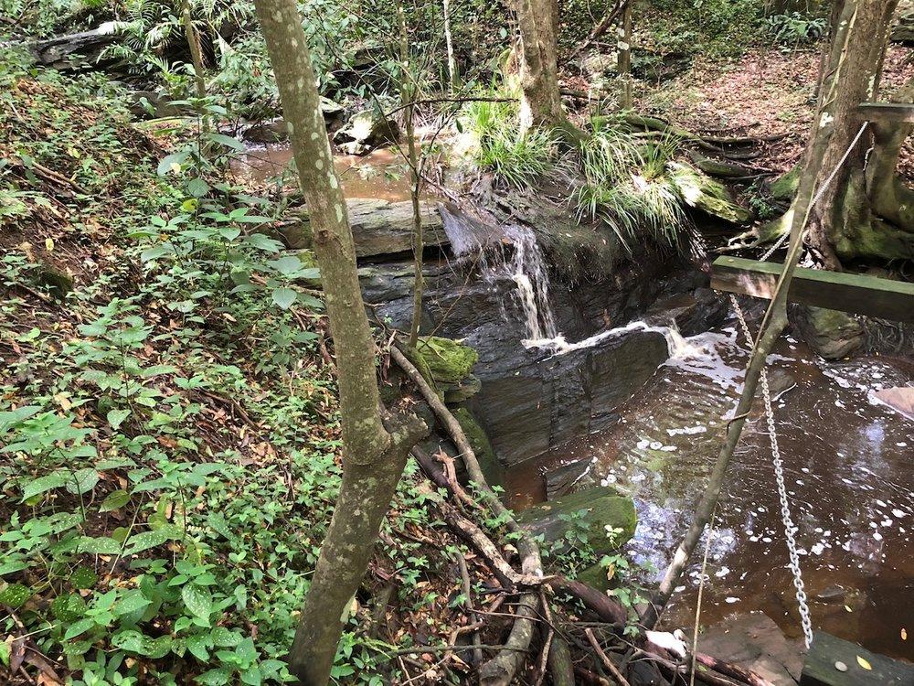 Bunyaville Forest Reserve
