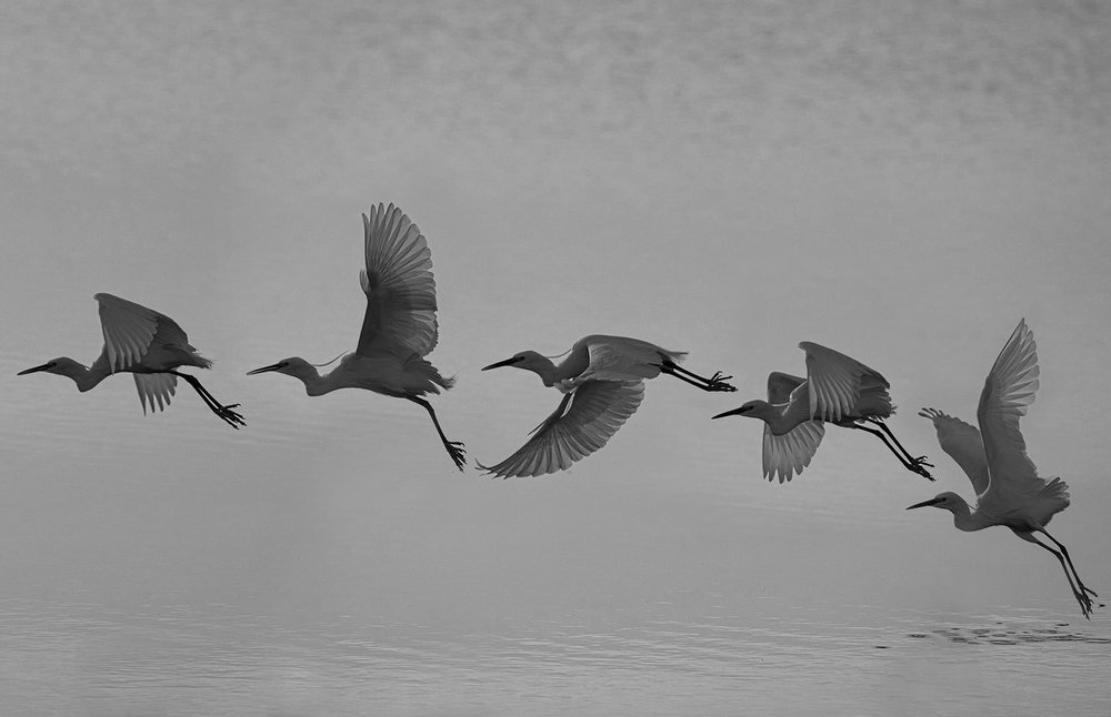 bird-3170895_1920.jpg