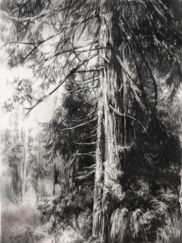 Hypatia's Woods I_sm.jpg