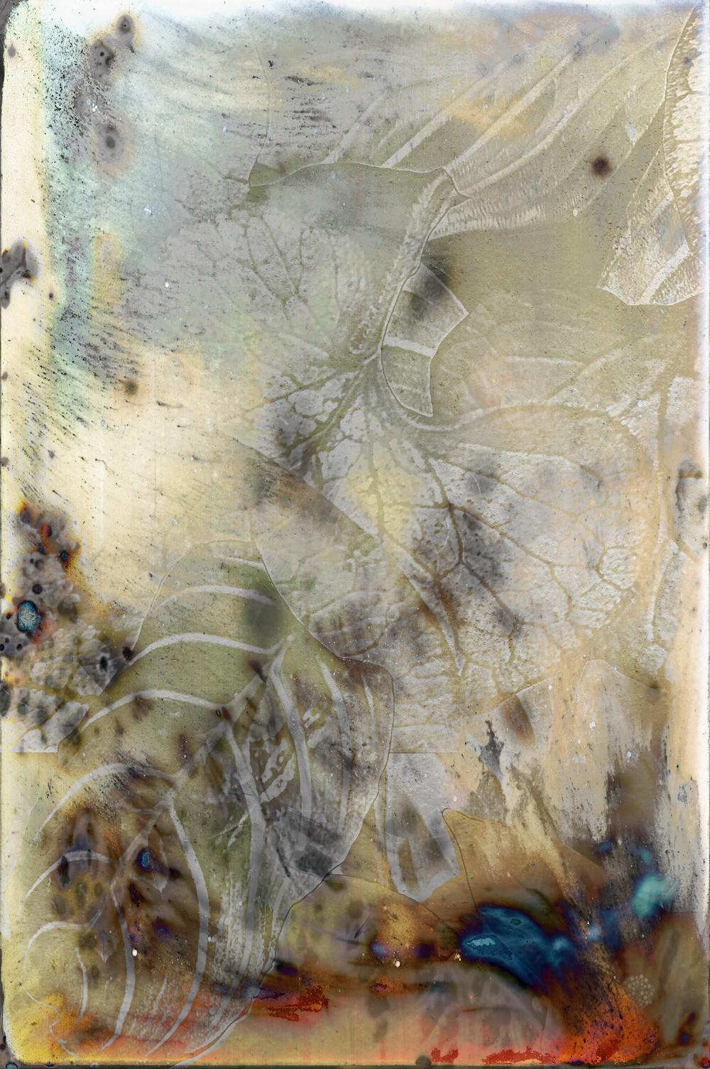 lhotka-bonny-forest-floor-pigment-on-aluminum-60x40.jpg
