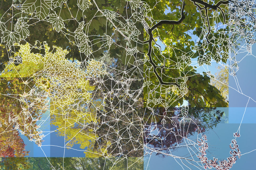 "Angela Beloian  ""Arbor"", 2017  digital drawing on photograph  24x34"