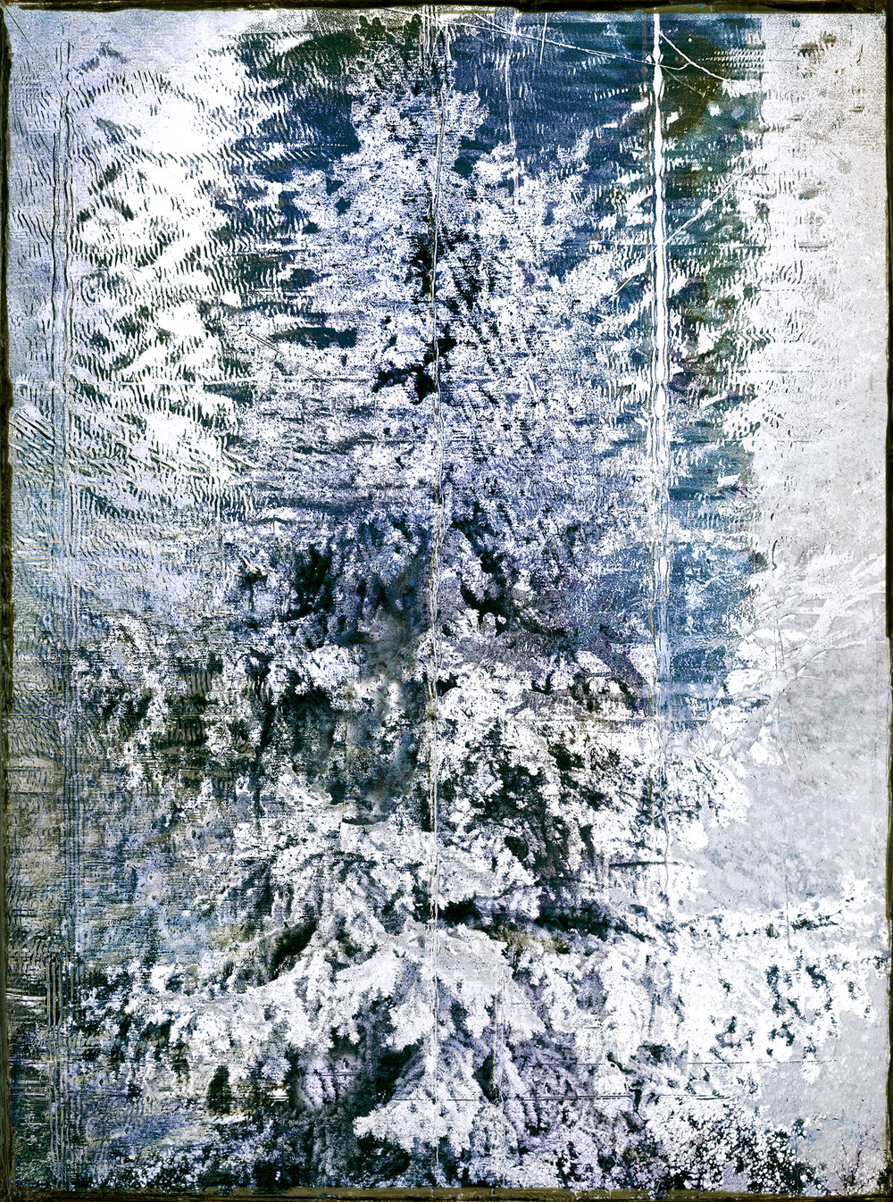 Spruce Frost