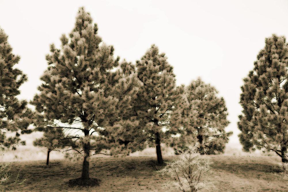 Select Pine