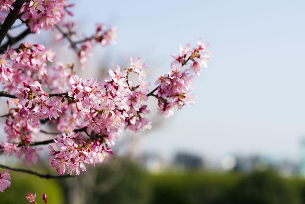 Taste_of_Spring_001_IMG_5634.jpg