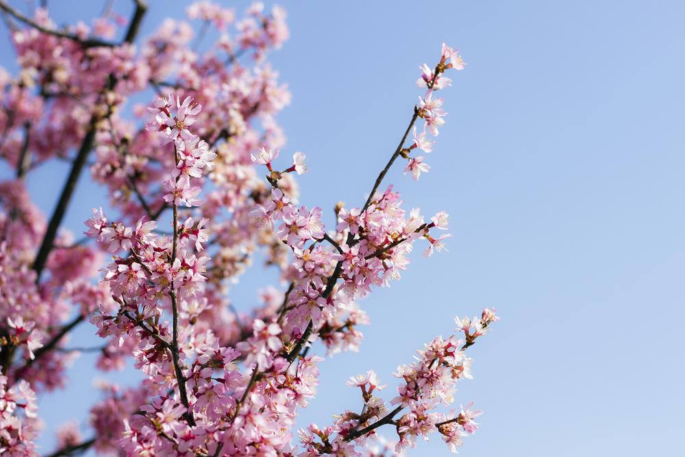 Taste_of_Spring_002_IMG_5635.jpg