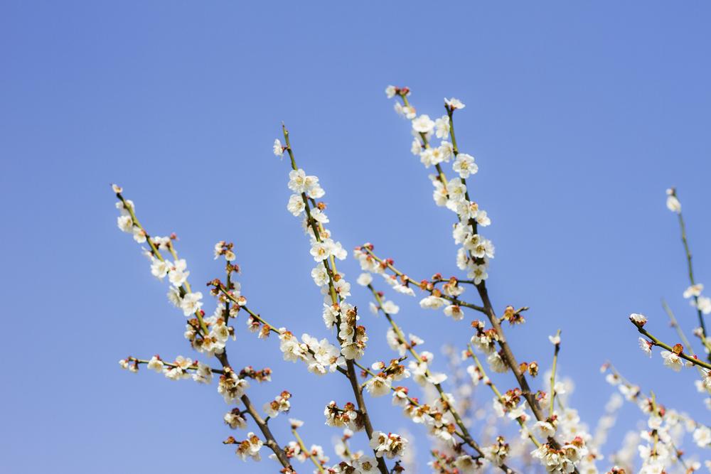 Taste_of_Spring_003_IMG_5598.jpg