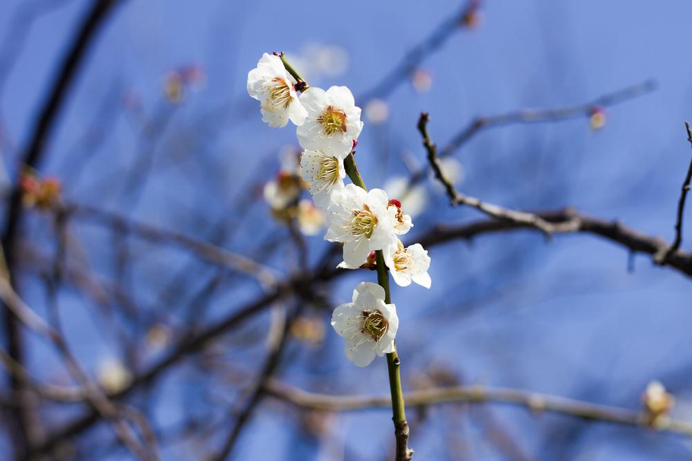 Taste_of_Spring_004_IMG_5601.jpg