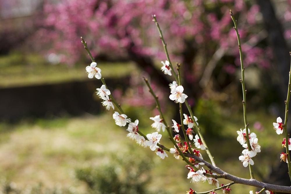 Taste_of_Spring_005_IMG_5538.jpg