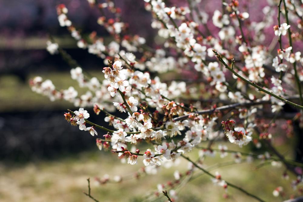 Taste_of_Spring_006_IMG_5539.jpg