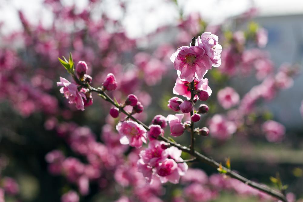 Taste_of_Spring_008_IMG_5542.jpg