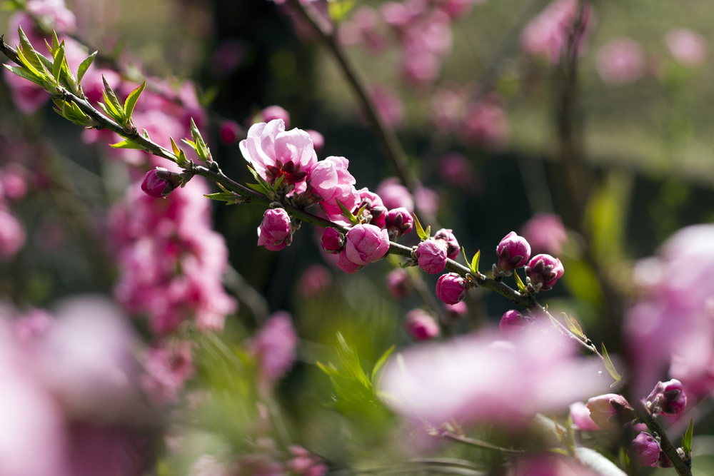 Taste_of_Spring_009_IMG_5543.jpg