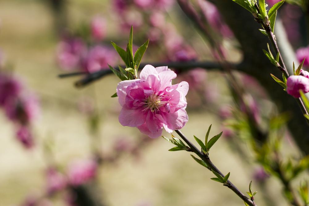 Taste_of_Spring_010_IMG_5545.jpg