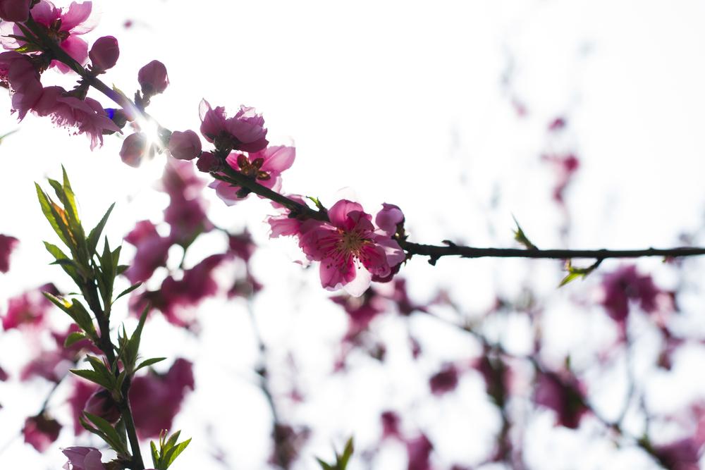 Taste_of_Spring_011_IMG_5552.jpg