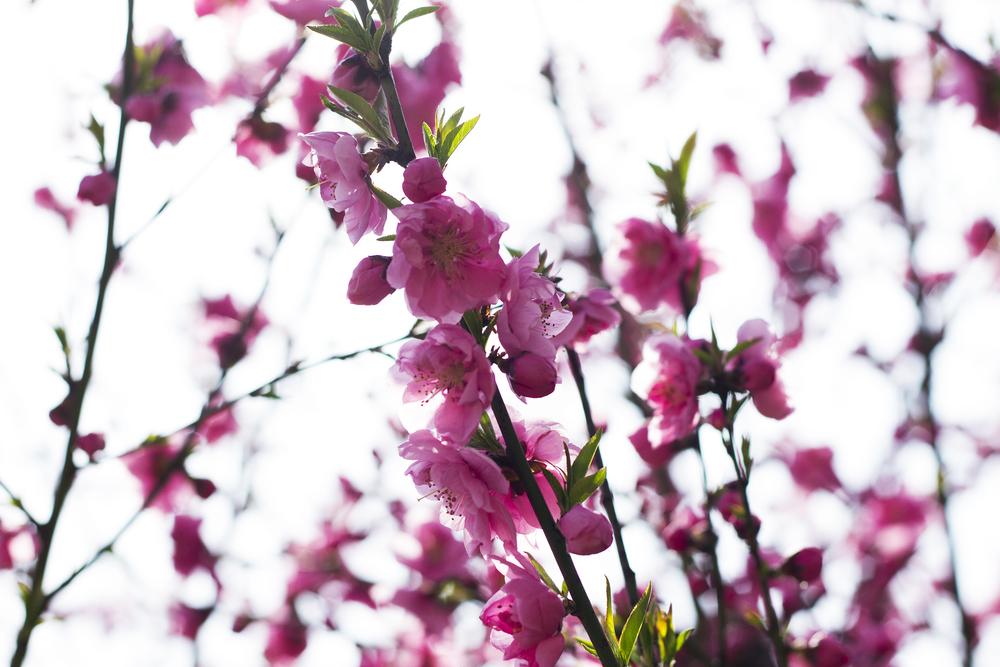 Taste_of_Spring_012_IMG_5554.jpg