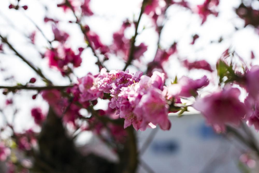 Taste_of_Spring_013_IMG_5556.jpg