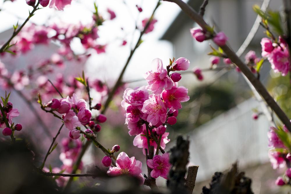 Taste_of_Spring_014_IMG_5561.jpg