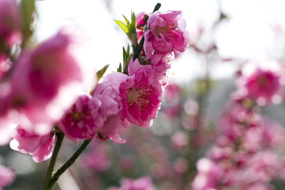 Taste_of_Spring_016_IMG_5564.jpg