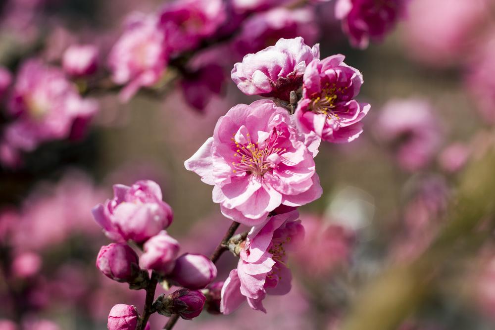 Taste_of_Spring_017_IMG_5571.jpg