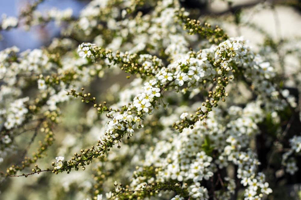 Taste_of_Spring_019_IMG_5585.jpg