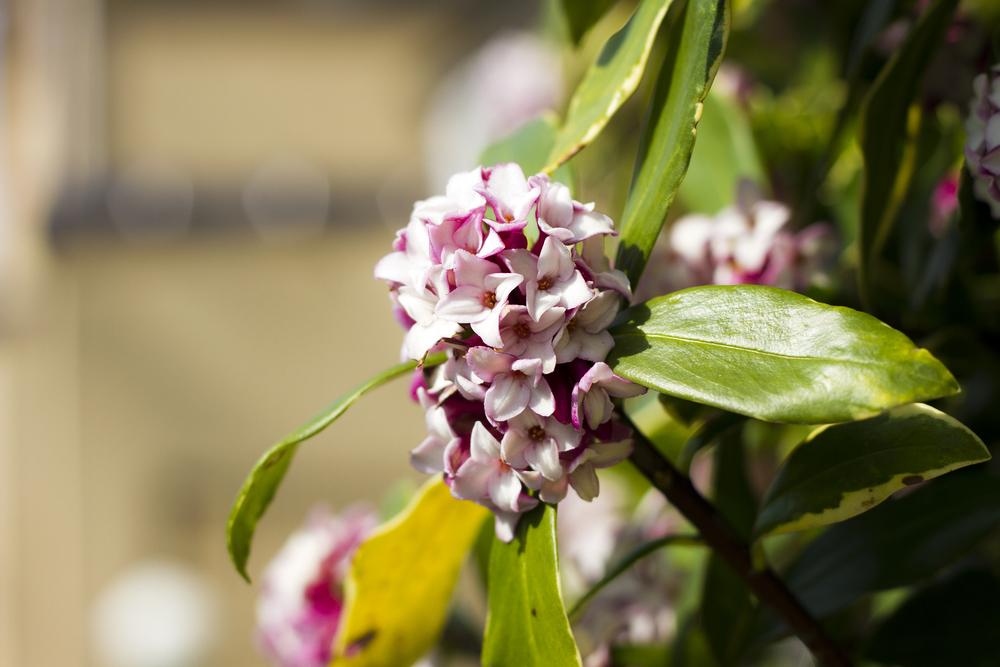 Taste_of_Spring_022_IMG_5607.jpg