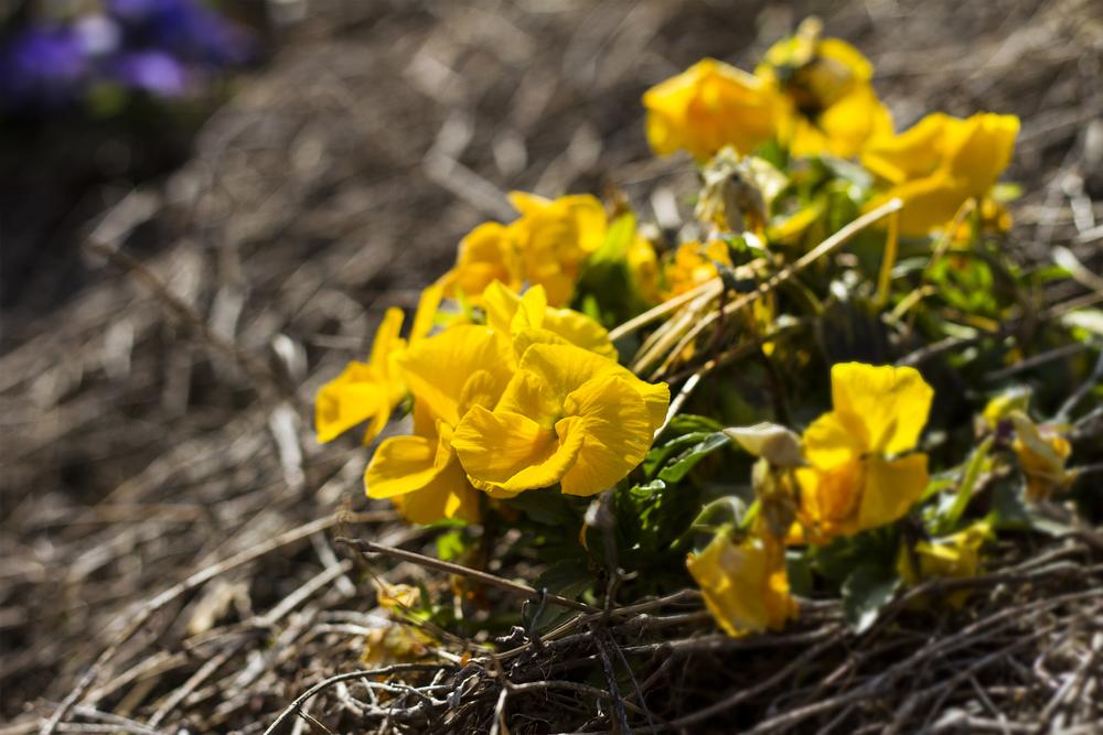 Taste_of_Spring_024_IMG_5615.jpg