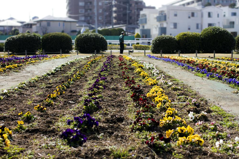 Taste_of_Spring_026_IMG_5641.jpg