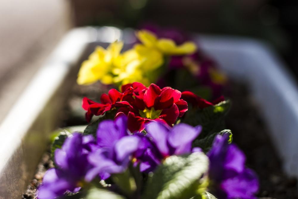 Taste_of_Spring_029_IMG_5666.jpg