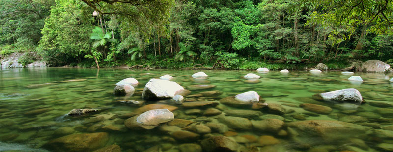 YHR_2-rainforest.jpg