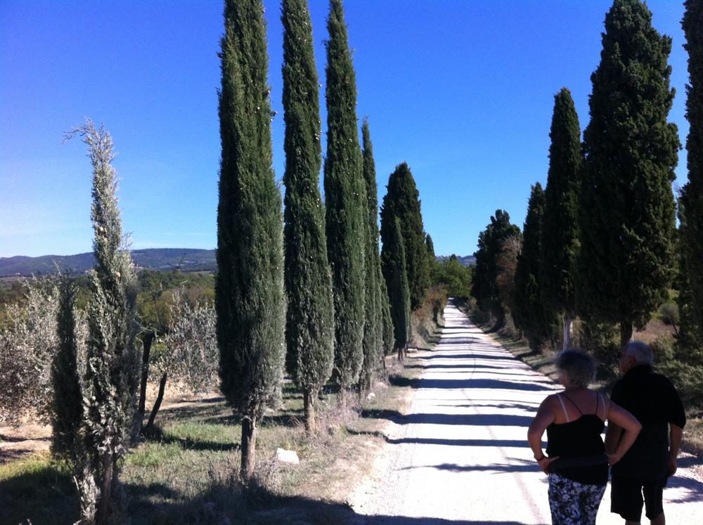 Walk on the estate